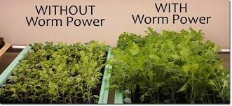 With and without worm power--which would YOU choose?!