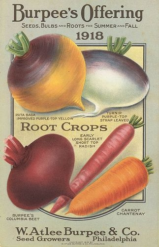 Go shopping for seeds!  Share with a friend!