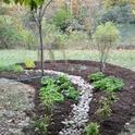 Blog, rain garden 4