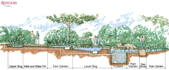 Rain Gardens Are A Creative Option. - Napa Master Gardener Column ...