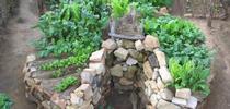 African keyhole garden for Napa Master Gardener Column Blog