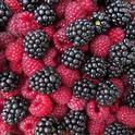 Glorious raspberries and blackberries
