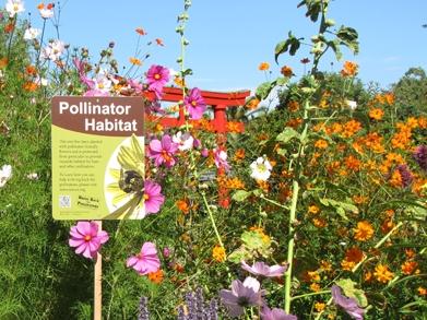 Pollinator garden  (The Xerces Society)