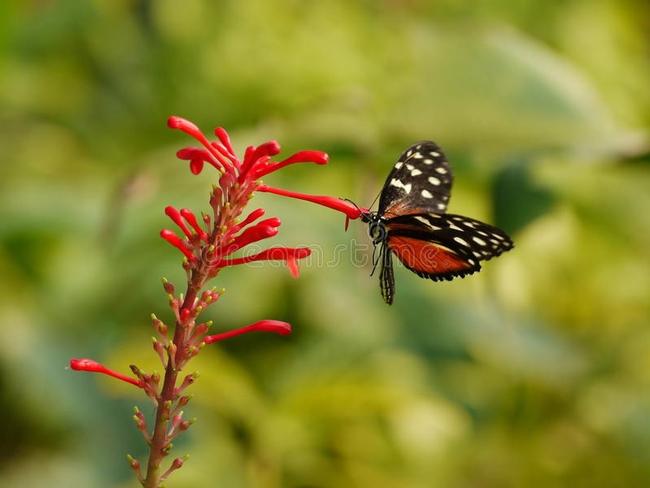 Butterflies like nectar, too. (Dreamstime)