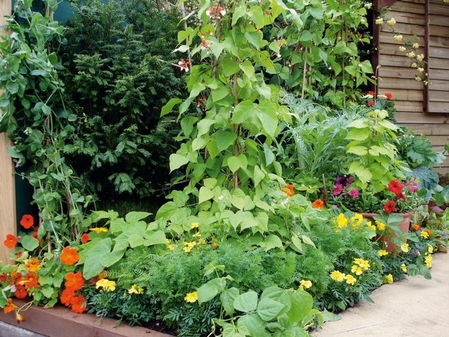Vegetables and flowers (DIY Network)