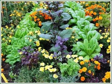Companions (No Dig Vegetable Garden)