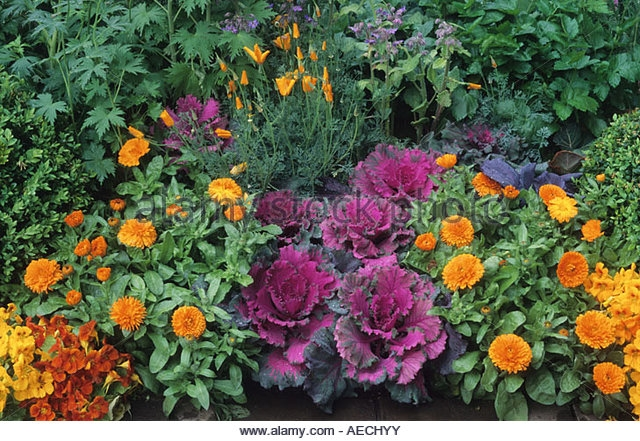Vegetables w.calendula, the orange flowers (Alamy)