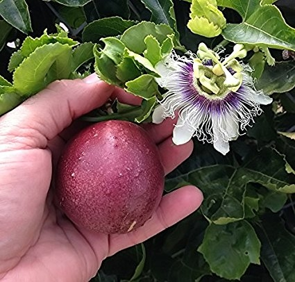 Passion fruit and flower (Amazon.com)