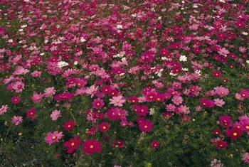 Plant in masses! (SF Gate)