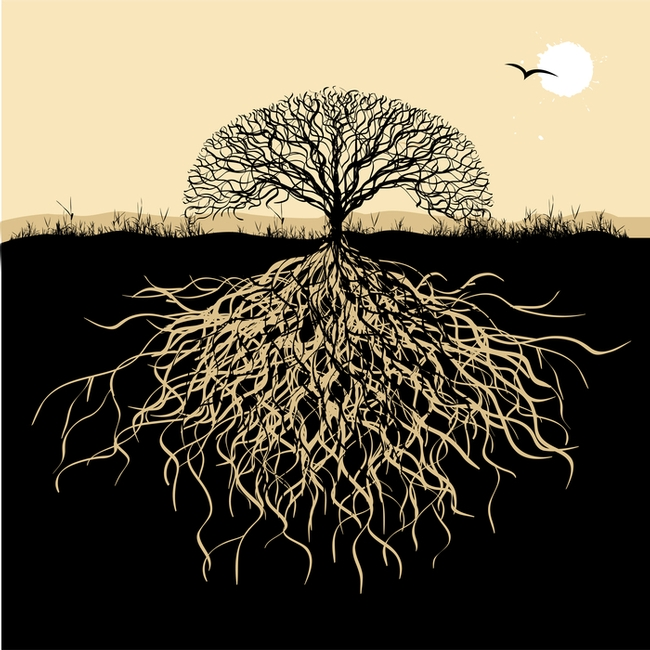 Plant smartly.  Roots grow deep and wide (Mindfulness Northwest)