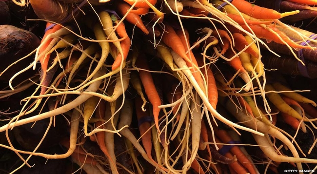 Carrots store sugars and starch (Fine Dining Lovers)