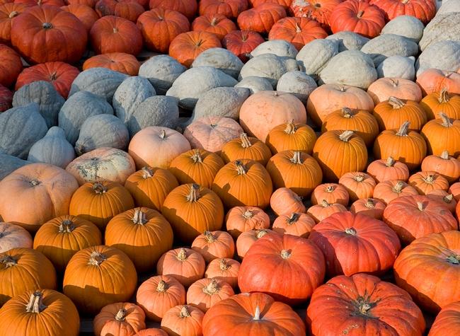 A rainbow of pumpkins (Hammertown)