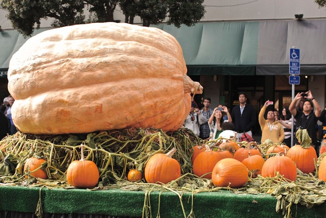 Giant pumpkin (Modern Farmer)