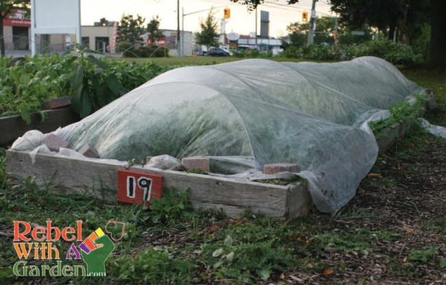 Rowcover protects your gardening efforts!  (Rebel with a garden)