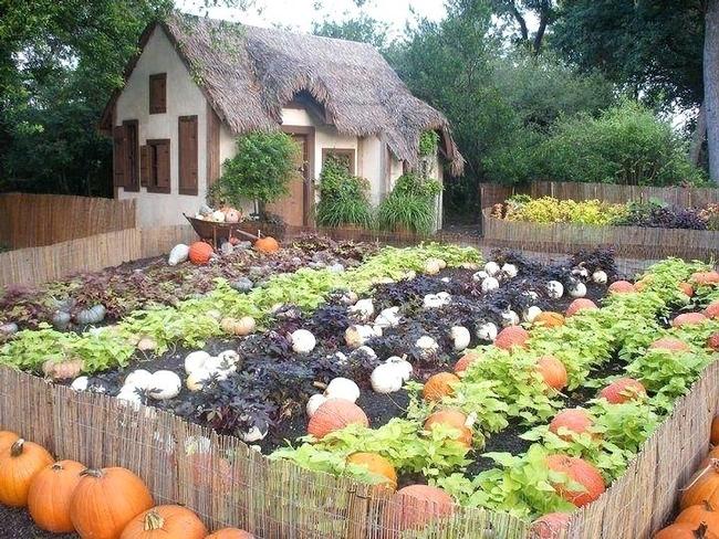 Pumpkins take a lot of room (abundantlifestyle.com)