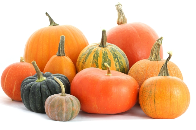 For gardeners who want pumpkins in the fall, NOW is the time to plant. (MarketStreet)