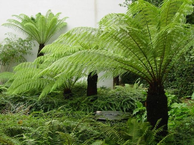 Ferns (Pinterest)