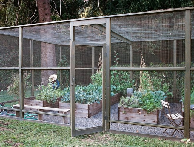 Napa Master Gardener Column - Agriculture and Natural Resources Blogs