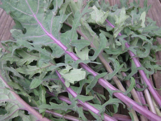 Red russian kale (Quickcrop)