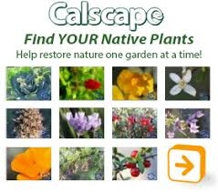 Calscape, find YOUR natives!