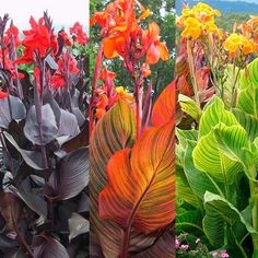 And just look at the variety of foliage and bloom colors! (pinterest.com)