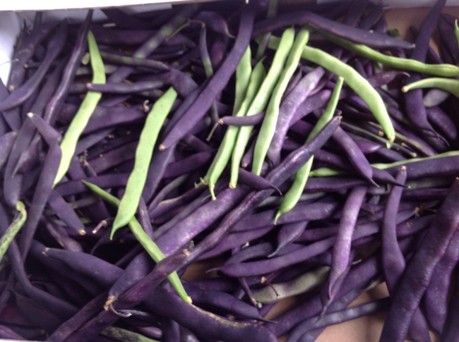 Purple summer beans (Margaret River Farmer's Market)