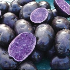 Purple potatoes 'Shetland Black'  (finandfarm)