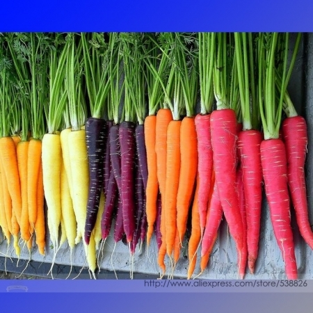 Colors of carrots--there's purple!  (deargogo.com)