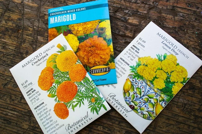 Varieties of marigold seeds (Montecito Landscape)