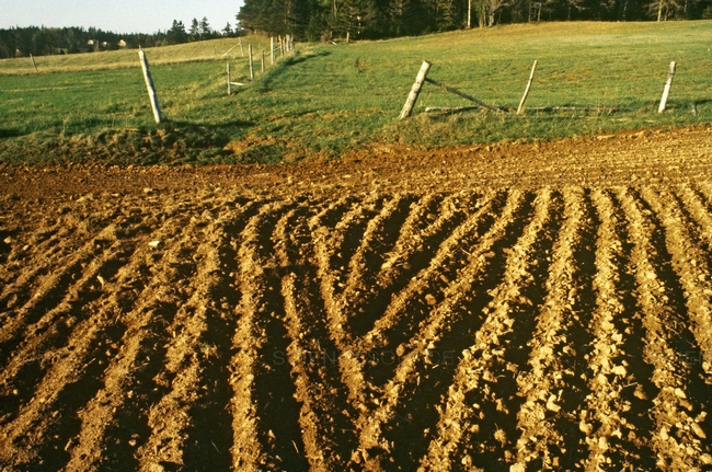 Tilled soil (Science Source)
