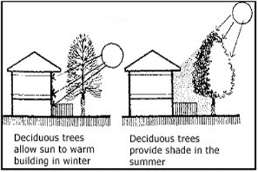 Leafy tree shade (WBDG)