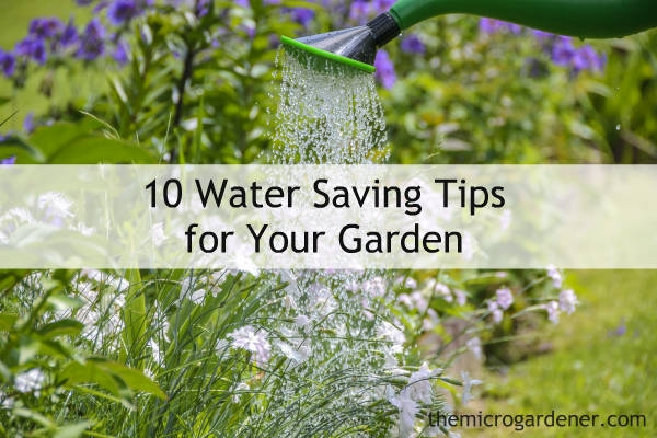 Plan to be a water saver.  (The Micro Gardener)