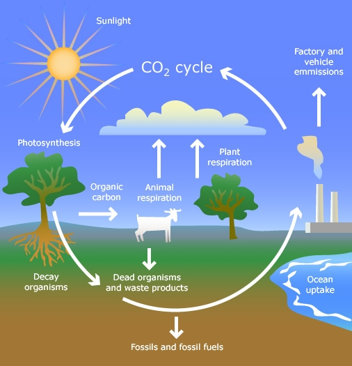 Plants can sequester carbon.  Eric Nightingale has a great article on this--it's a week or so earlier than this. (apeuk.org)