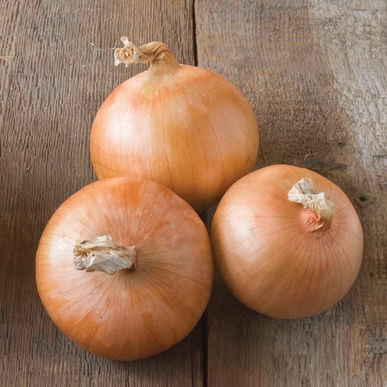 Candy onion --Imagine an onion named Candy!  (Johnny's Selected Seeds)