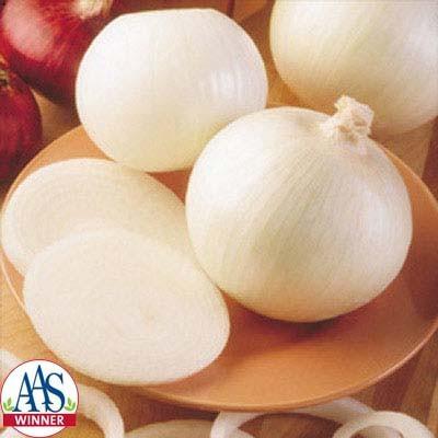 Super Star onion (Harris Seeds)