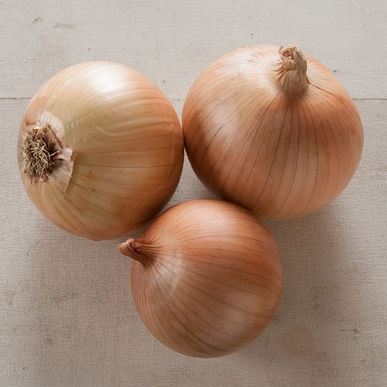 Scout onion (Johnny's Selected Seeds)