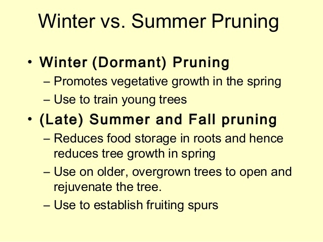 Most fruit trees need dormant and summer pruning.jpg (Slide Share)