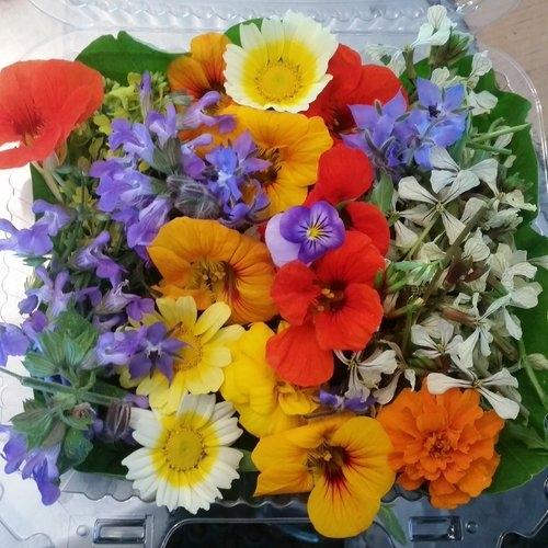 Edible flowers (cascadeorganic.com)