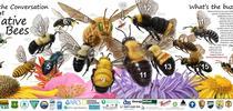 Native California bees (Bee City USA) for Napa Master Gardener Column Blog