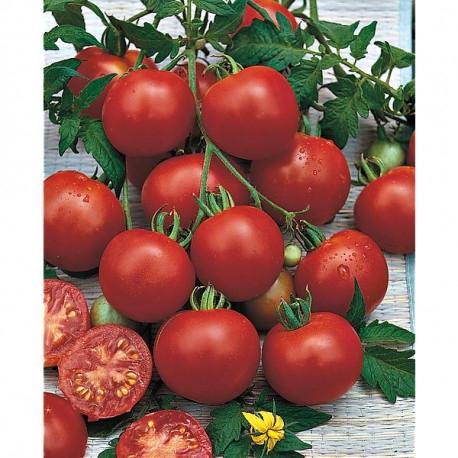Bloody Butcher (tomatobomo)
