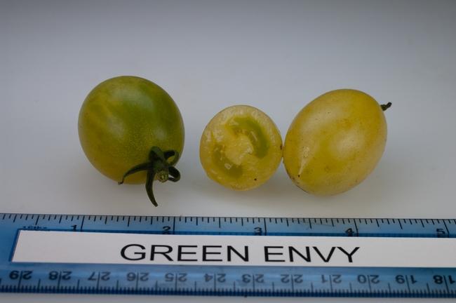 Green Envy (Rutgers)
