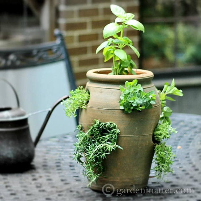 These herbs are growing in a container, and they grow just as beautifully in a well-prepared garden bed.(gardenmatter.com)
