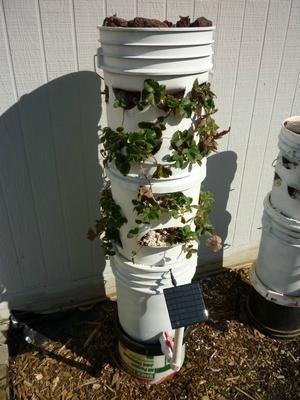 Bucket vertical planter (Pinterest)