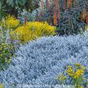 Silver gray foliage provides contrast and a cool vibe (PhotoBotanic Stock Photography Garden Library [holt 286 5180])
