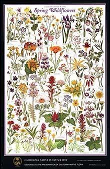 Spring wildflowers (CNPS)