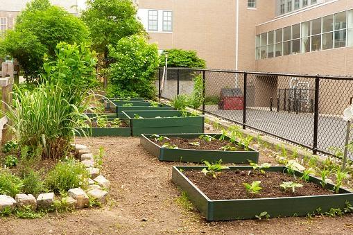 School garden (Garden-Love to Know)