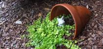 Spotting spilled flowers (Bored Panda) for Napa Master Gardener Column Blog