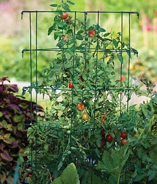 Give that cage a little wiggle to help pollination(Tomato Dirt)