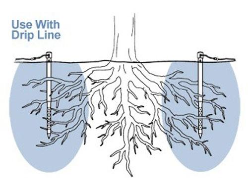 water at the drip line (buyirrigation.wordpress.com