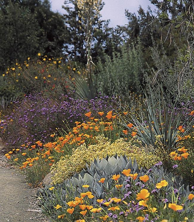 California native garden (zugardens.com)